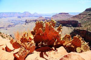 Grand Canyon 2-9