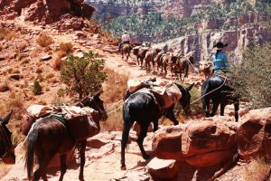GrandCanyon-2-horses