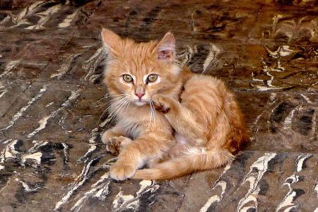 A kitten.