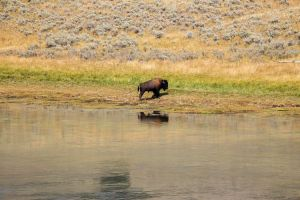 yellowstone2-aug2015-5