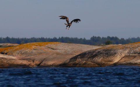 4-eagle