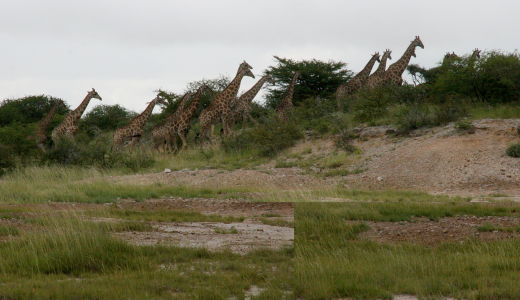 Namibia-2011-2