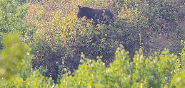 bear-1050x500