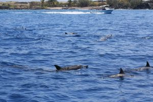 Hawaii-bigisland-whale-12