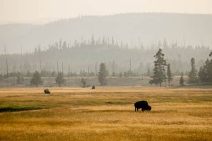 yellowstone1-aug2015-25